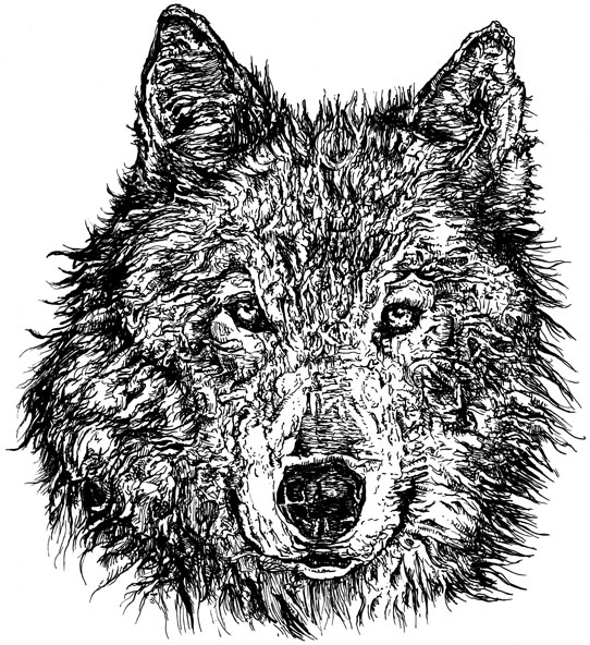 wolf illustration by chris o'neal